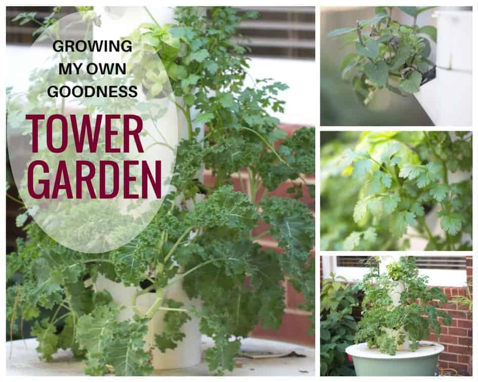 Tower Garden is an easy way to grow your own kale and herbs.