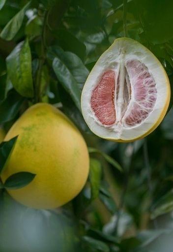 Asian Fruit - pomelo