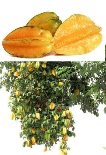 Asian Fruit - star fruit